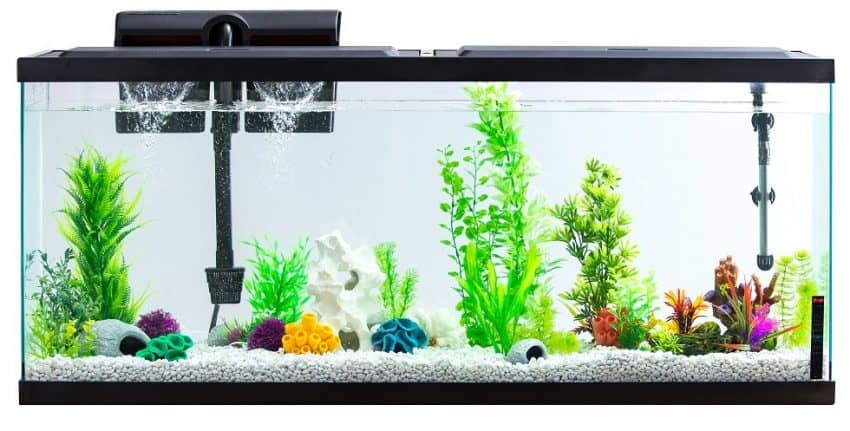 Buy A Quieter Aquarium Filter
