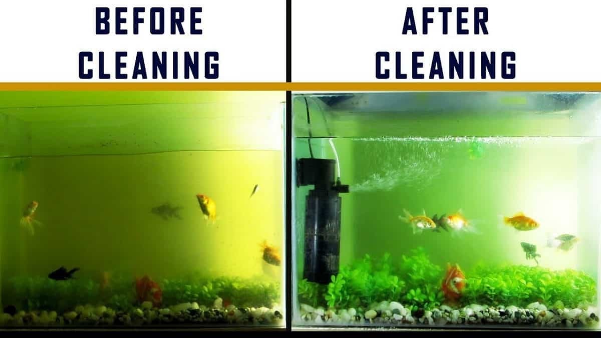 Cleaning the Fish Tank Filter