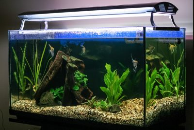 How to Make a Fish Tank Filter Quieter