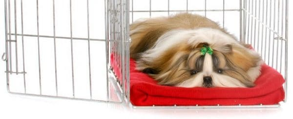 Use Blankets on Dog Crate