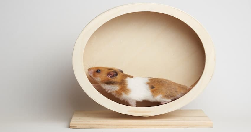 Quieter Hamster Wheel