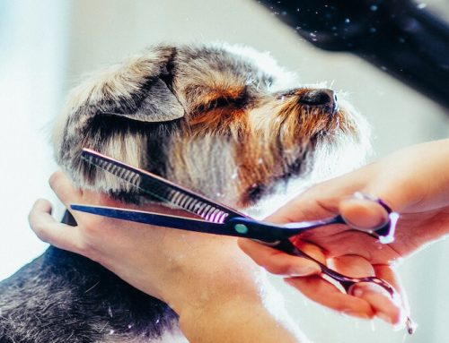Top 7 Quietest Dog Clippers: Best for Grooming Anxious Dog