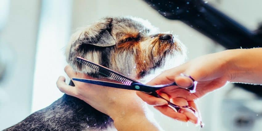 Best for Grooming Anxious Dog
